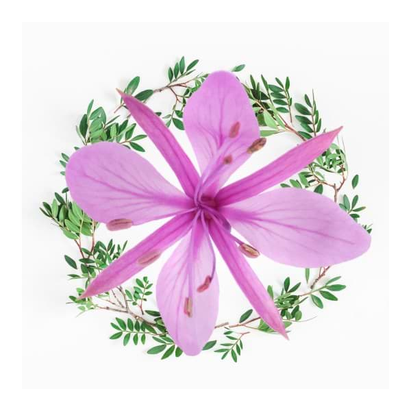 Highdroxy Porify BHA Solution Wirkstoff Pistazie und Weidenröschenblüte