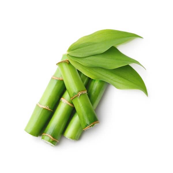 Highdroxy Derma Beads Stangen der Bambuspflanze mit Blättern vor weißem Hintergrund